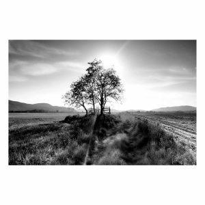 Landscape Tree 80×120